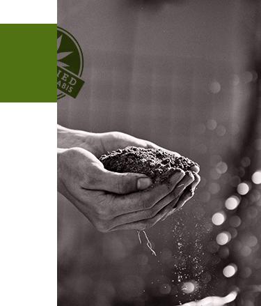 cannabis-dirt-mofga